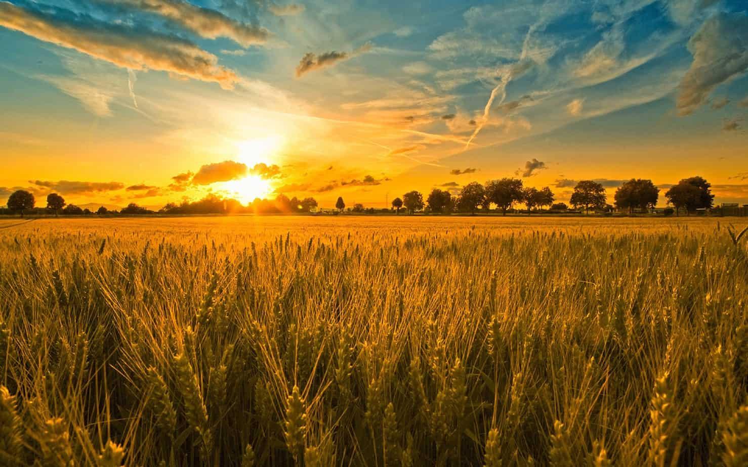 harvest is plentiful