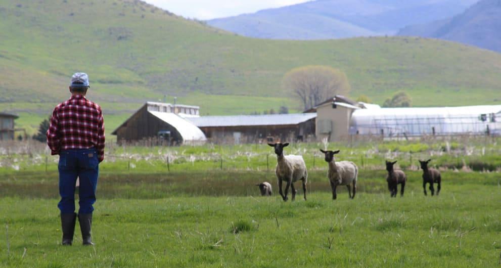 Confidence in the good shepherd